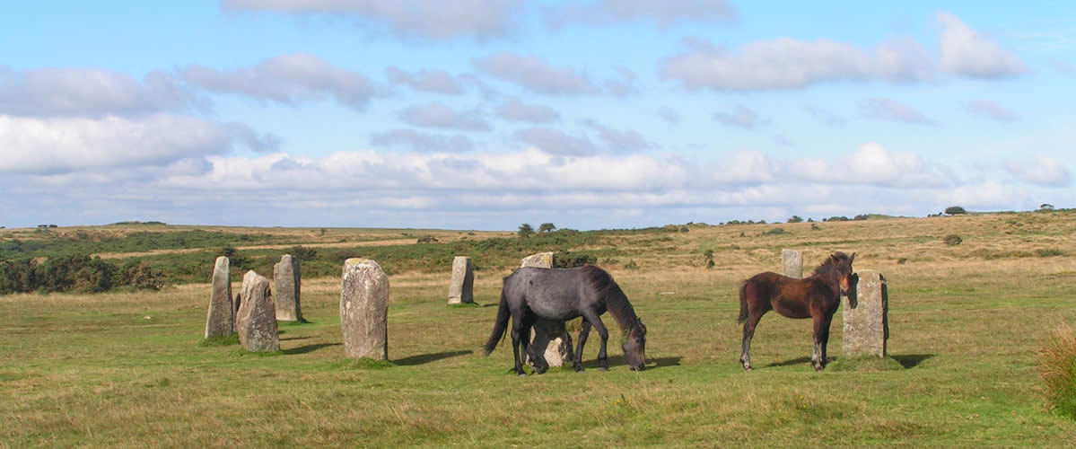 Ponies grazing at the Hurlers Stone Circle on Bodmin Moor